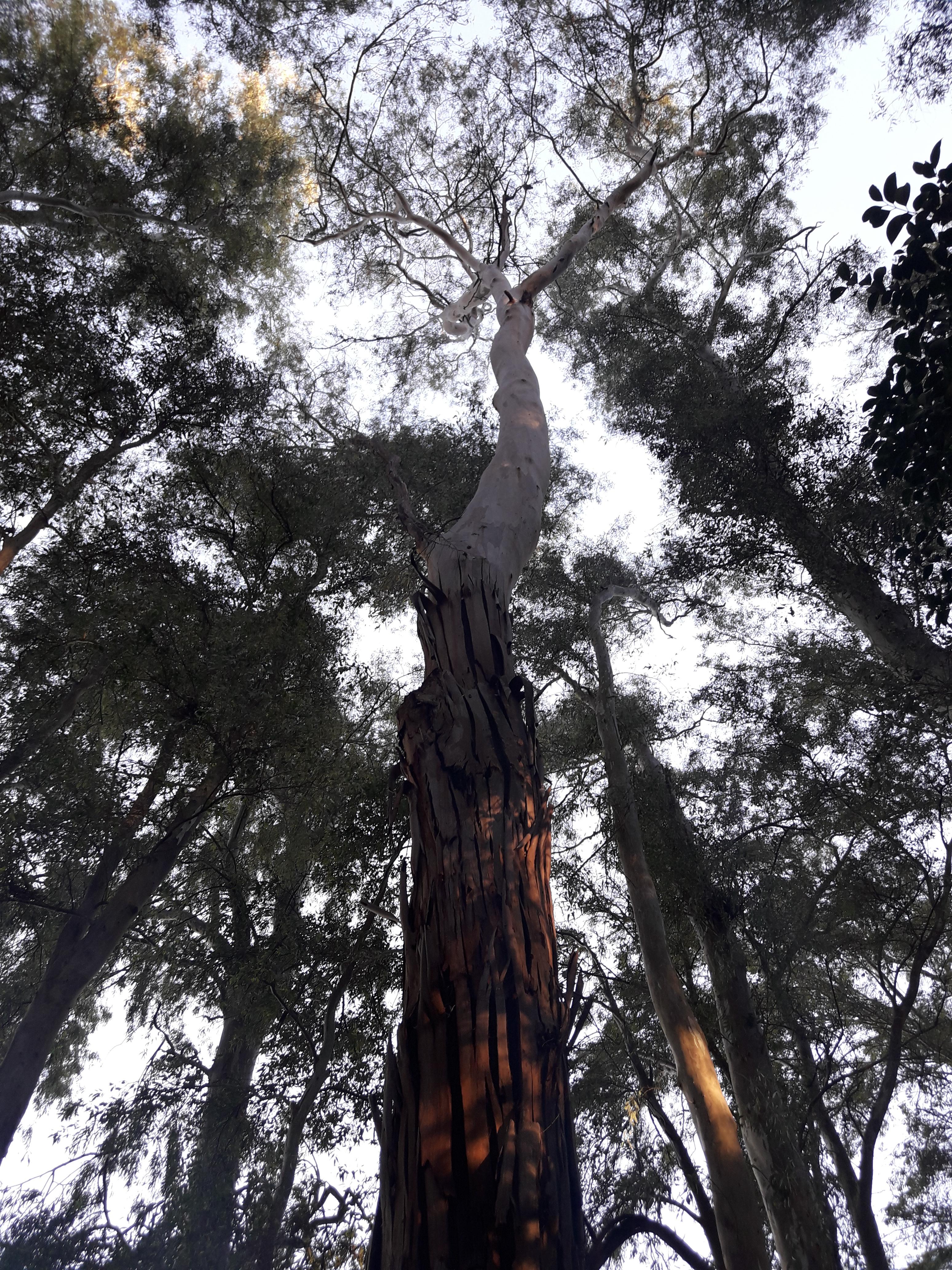 """Narrativa: """"El Bosque"""", por Ignacio Bosero"""